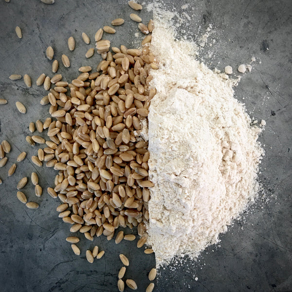 Identity Preserved, Organic Patwin Hard White Winter Wheat Kernels: 4lb Bag