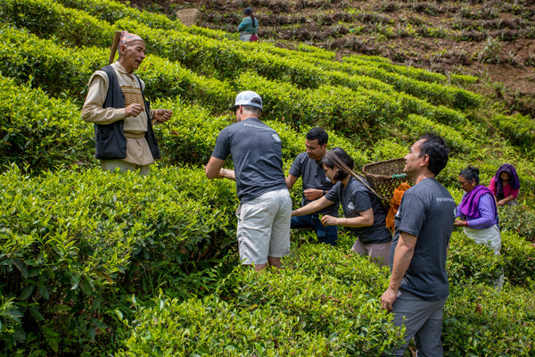 Nepali Tea Traders staff working among the professional tea farmers.