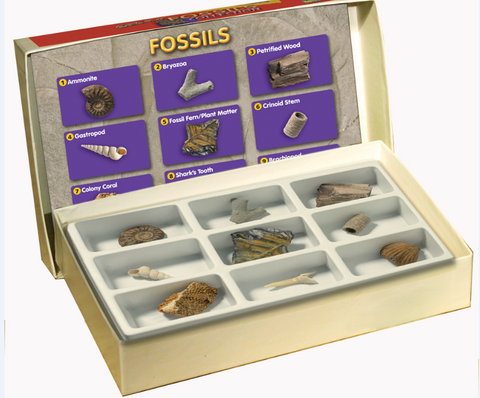 Fossils , Science