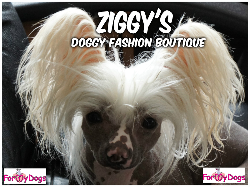 Ziggy's Doggy Fashion Boutique