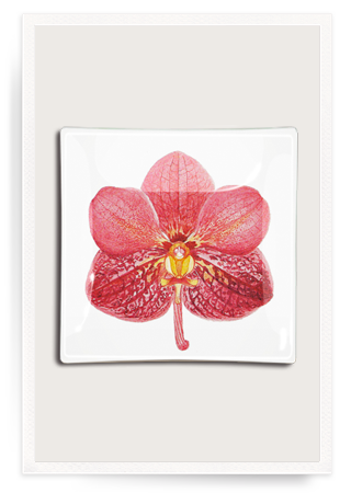 Ben's Garden - Glass Tray - Pink Orchid 8x8""