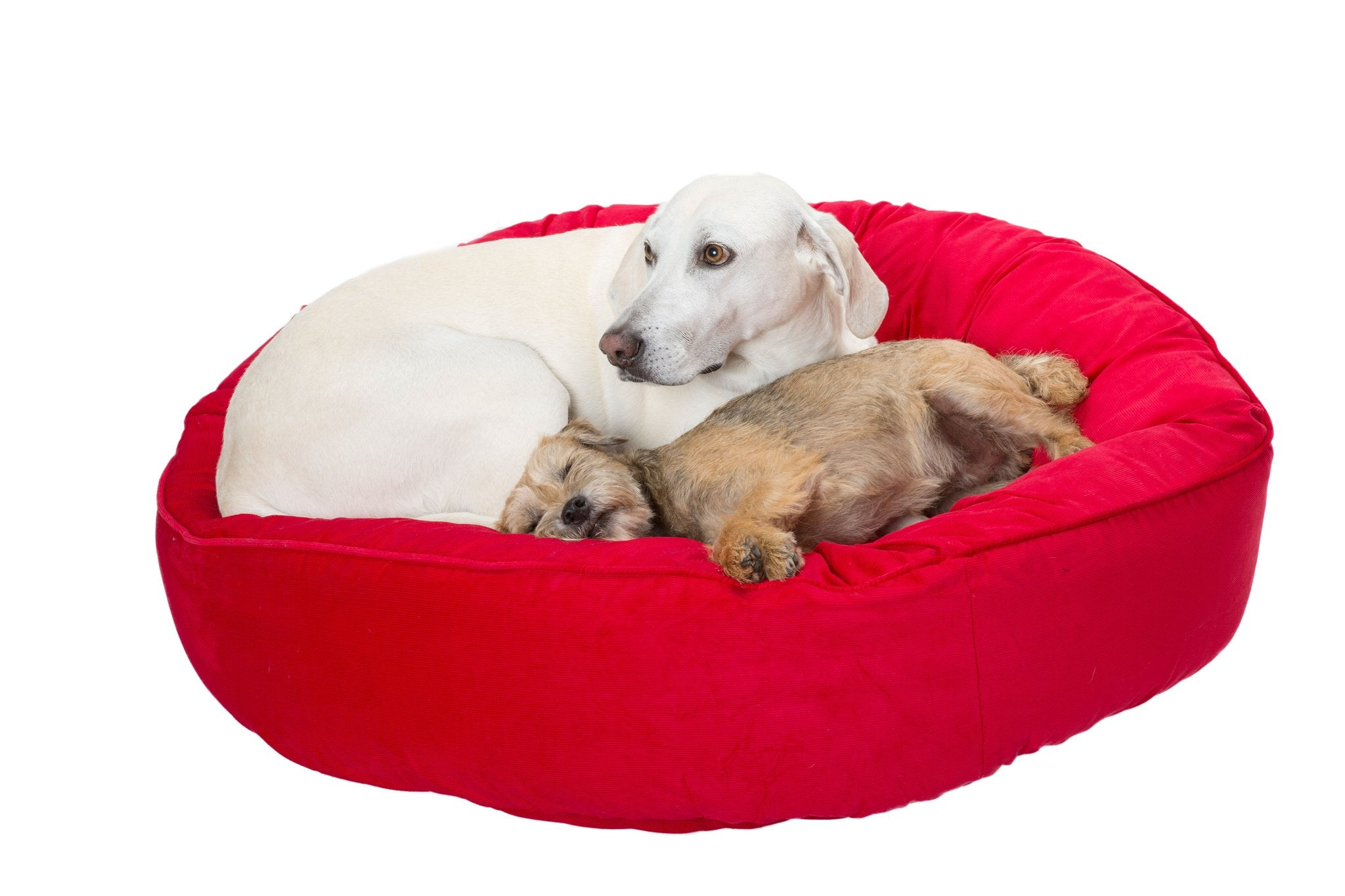 Luxury dog beds by Canine Styles