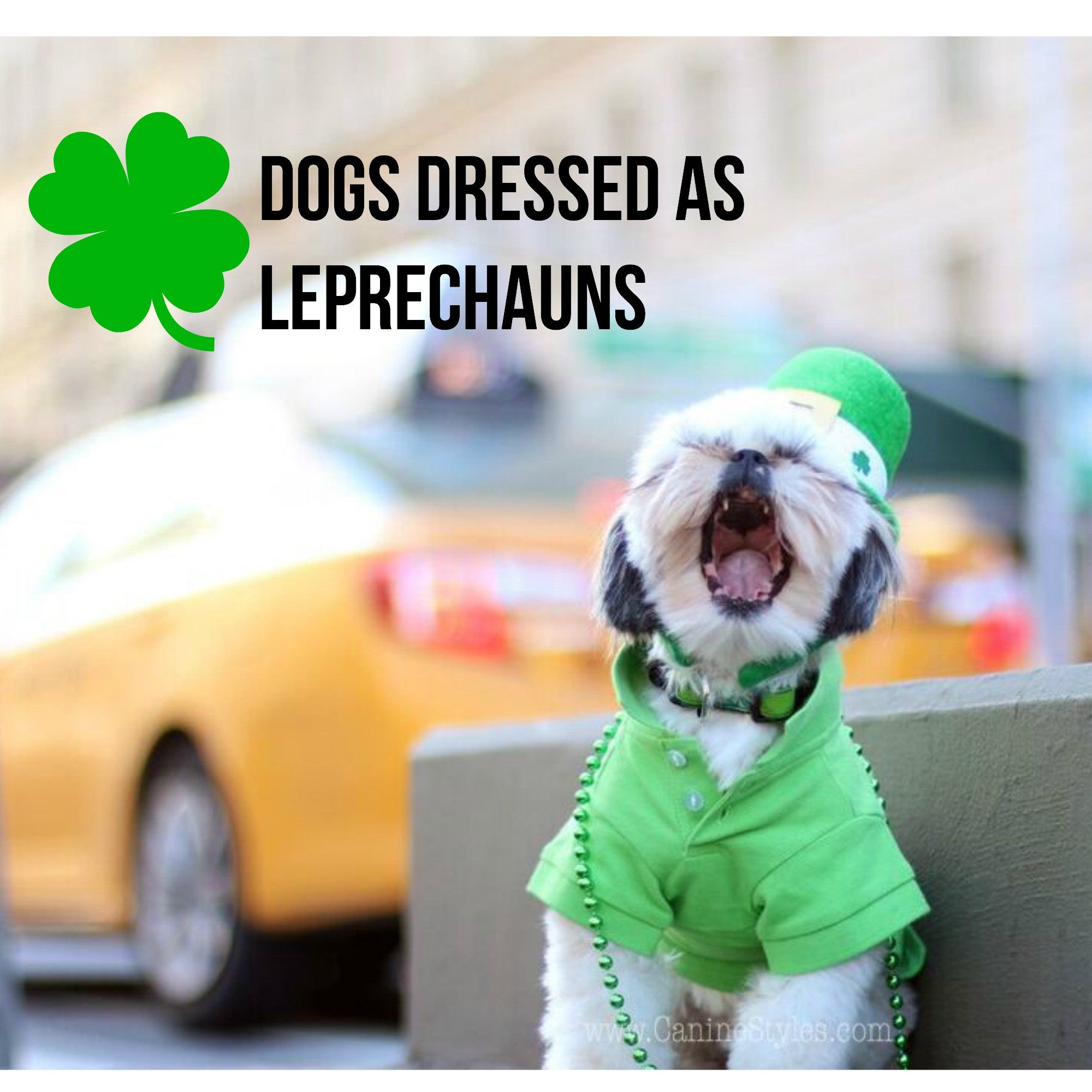 These Dogs are Dressed As Leprechauns And You won't believe the Cuteness!! Wow!