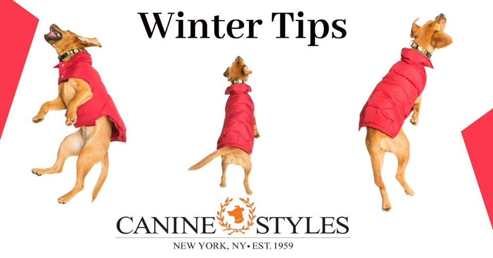 Winter Tips: Protecting Your Pups From the Cold.