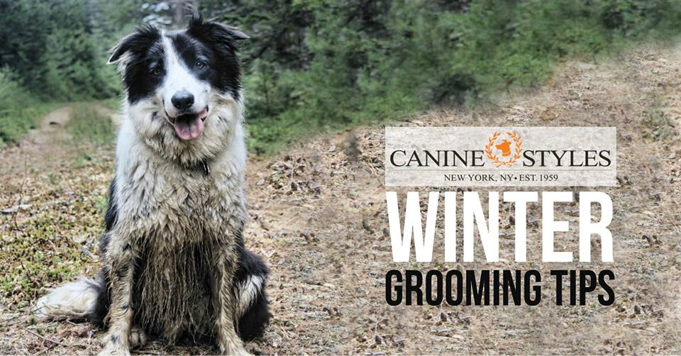 Five Grooming Tips for Cold and Wet Months