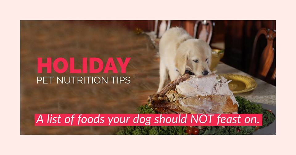 Holiday Pet Nutrition Tips