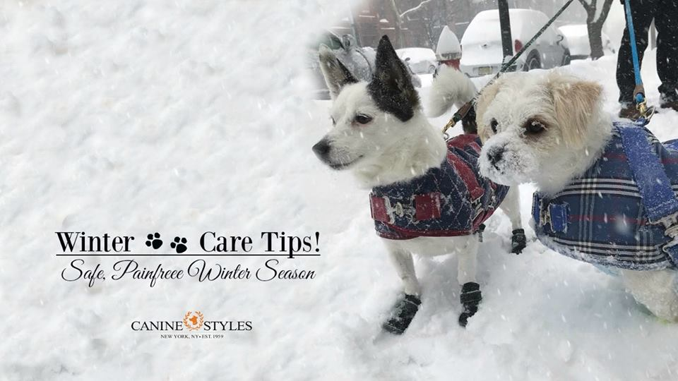 Winter Paw Care Tips