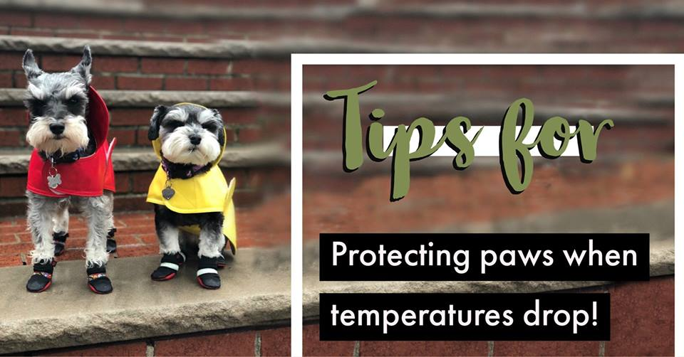 TIPS FOR PROTECTING PAWS WHEN TEMPERATURES DROP