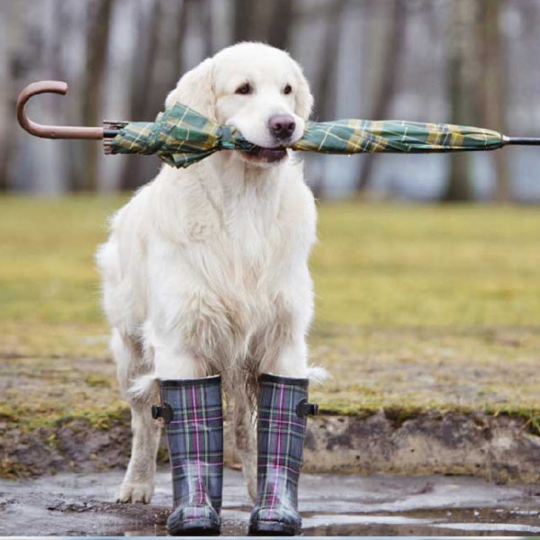 10 Ways to Better Care for Your Dog in Wet Weather