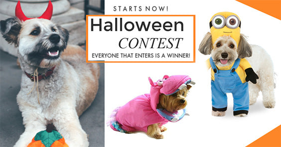 Halloween Best Dressed Contest
