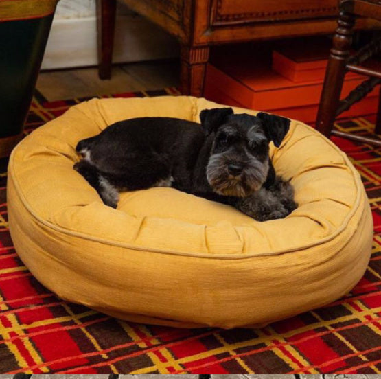 Time for New Furniture? Don't Forget a New Dog Bed!