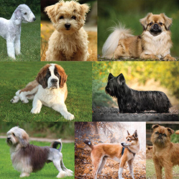 Rare Breeds that Make Great Pets