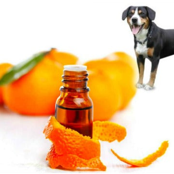 Essential oils for Dogs Written by Ron Haggerty Jr