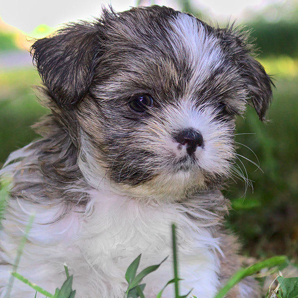 The 13 Most Popular Mixed Breed Pups!