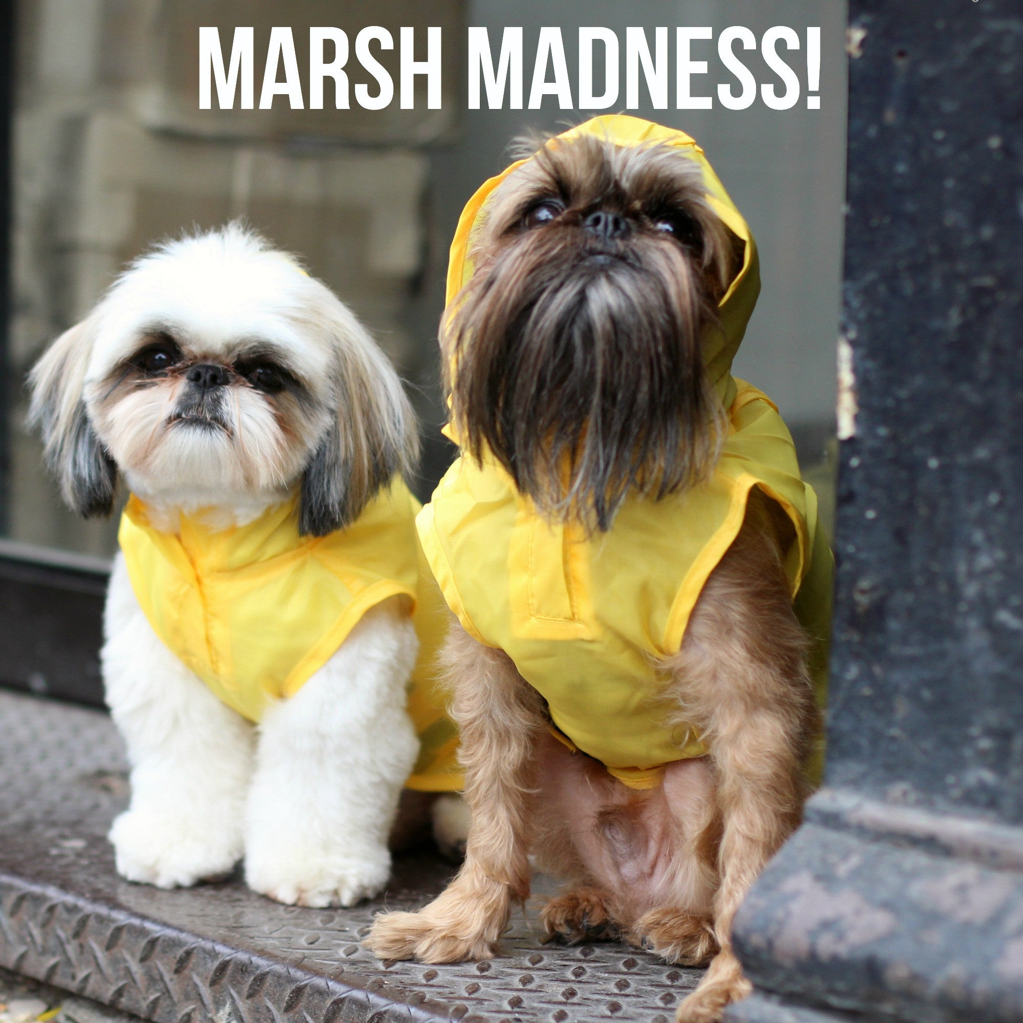 Marsh Madness ends with a Dog with a Cool Beard! COOL!