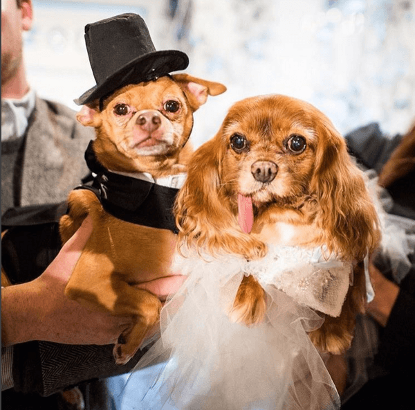 01/16 - LittleThings.com Announces Canine Styles President Designed Clothes for Celebrity Dogs Toast and Finn Star-Studded Wedding for Charity