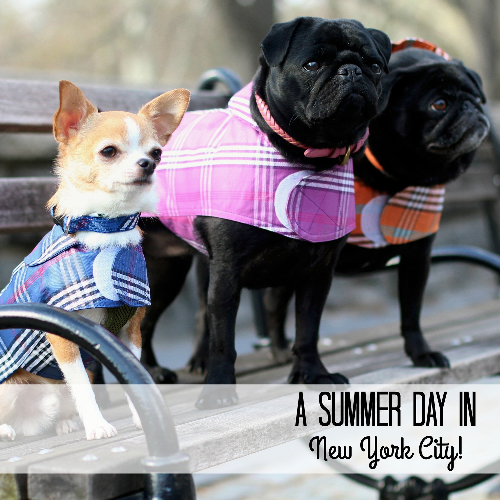 DONE - Whats Trending this Summer In Dog Fashion - New York City Version!