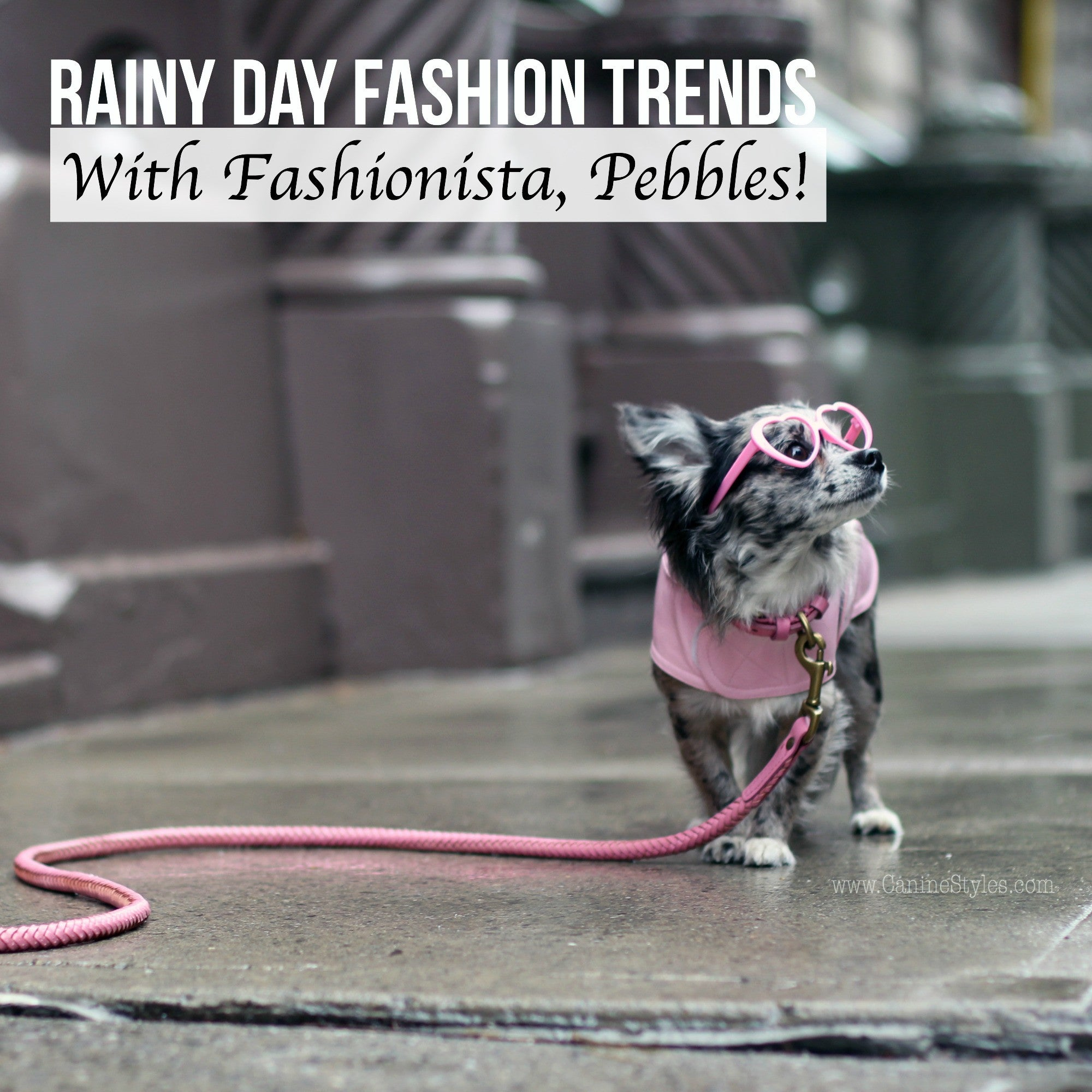 This Cute Ball of Fur Shares Her Rain Day Fashion and Its Gorgeous! Wow!