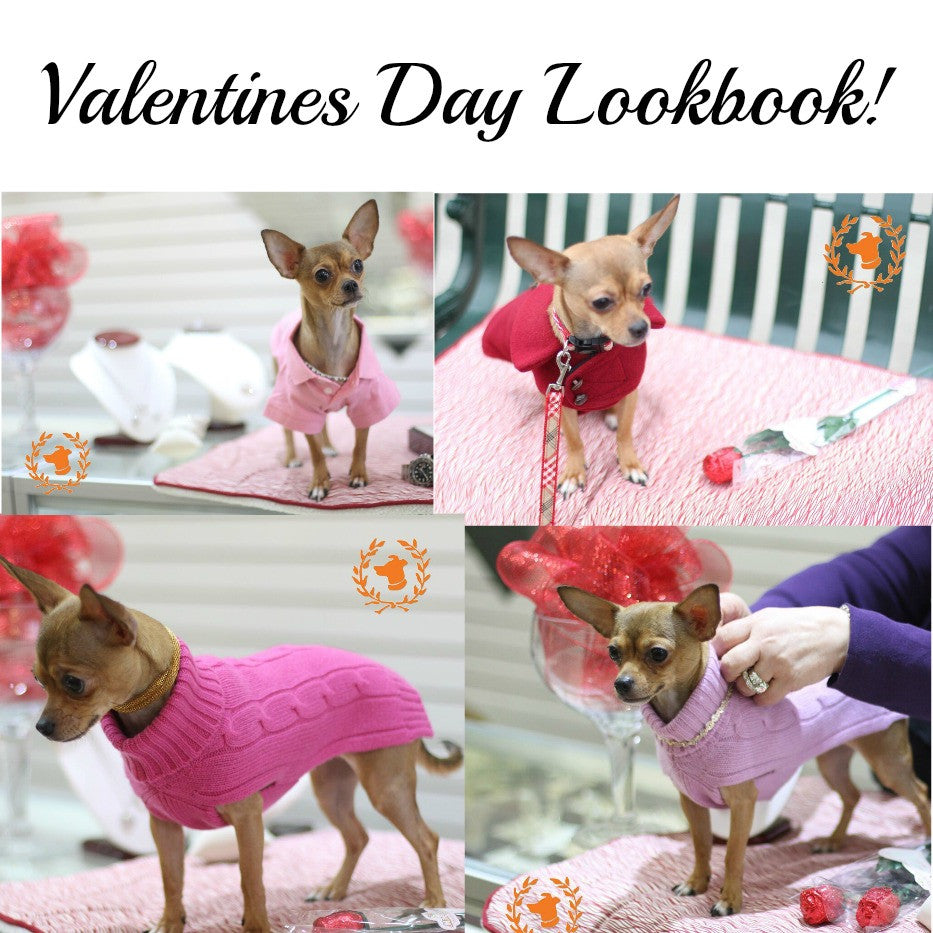 Valentines Day Dog Clothing Lookbook