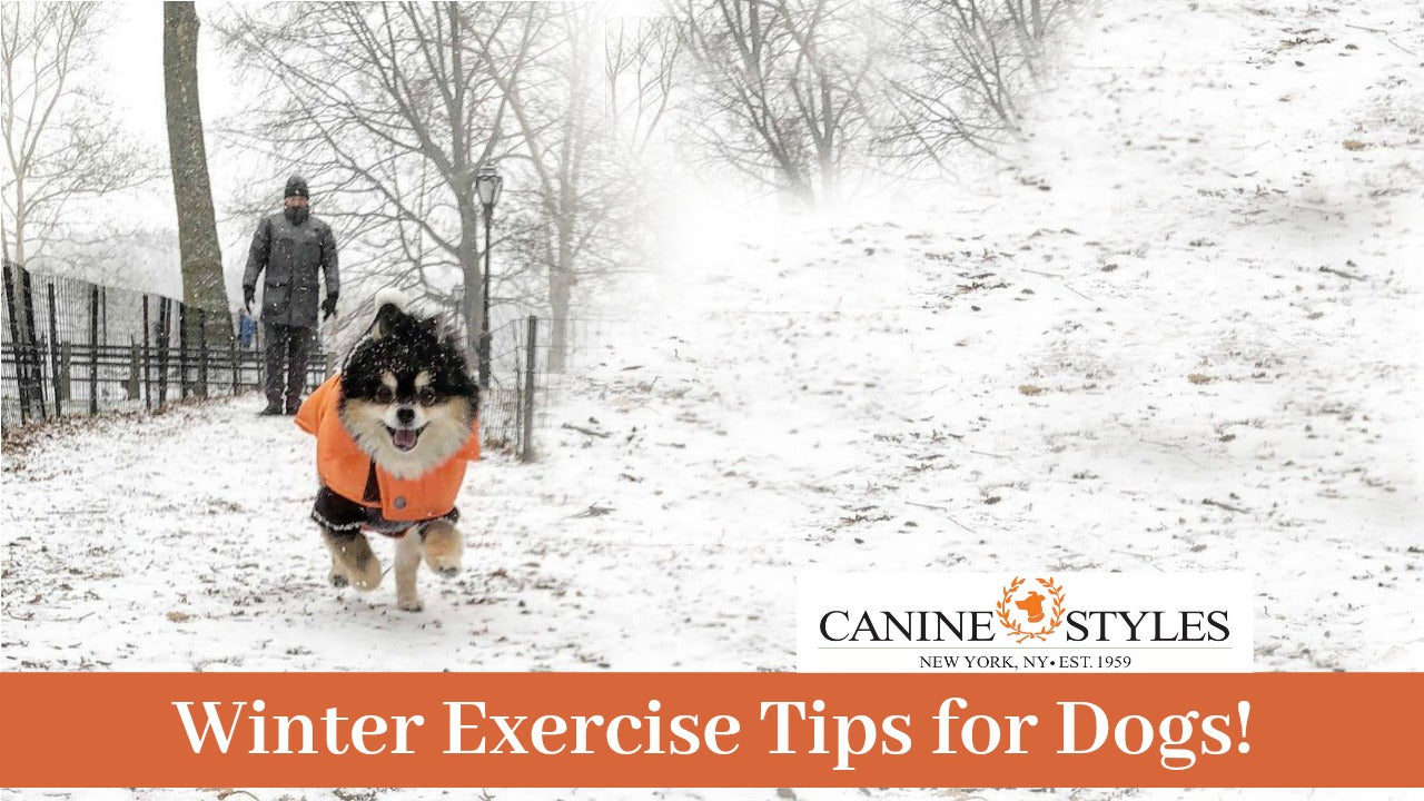 Winter Exercising Tips by Canine Styles