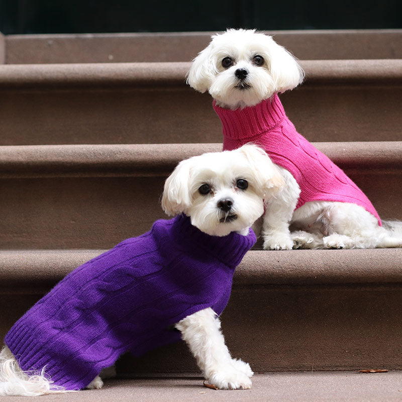 Fall Fashions for Your Pooch