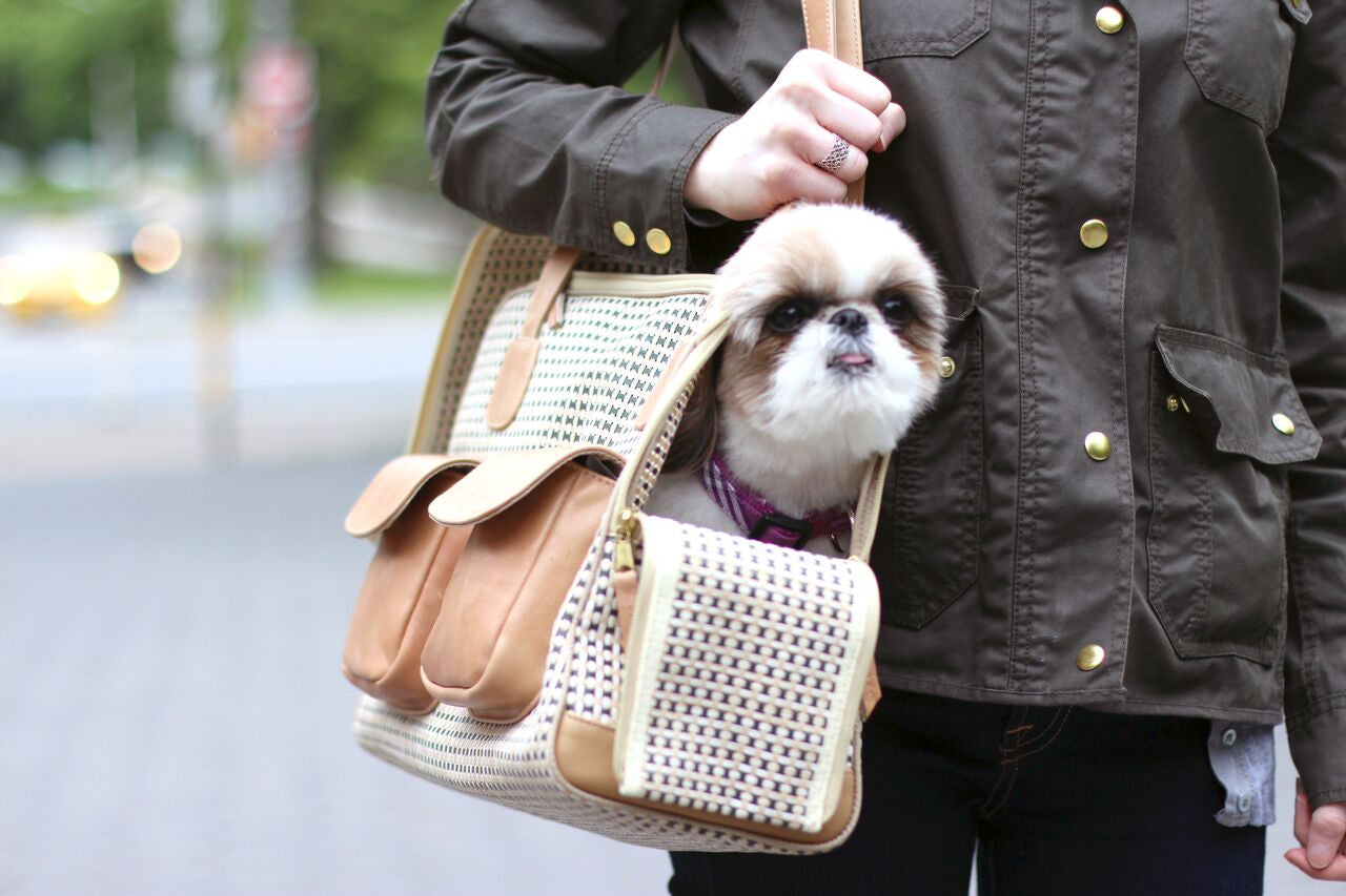 Ceili Takes The Town Canine Styles Dog Carriers!