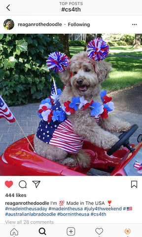 Second place - Yankee Doodle Dandies Dog Contest