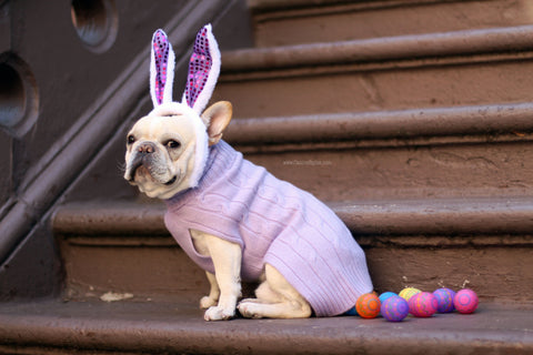 Mickey Walker is a Frenchie living in NYC Check out his Easter Bunny look - Follow his Dog adventures @mickeywalker_nyc