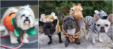Canine Styles Dog Halloween Costume