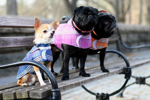 Canine Styles Dog Clothes - Plaid Rain coats
