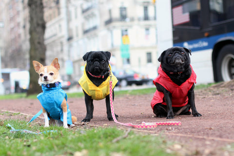 Canine styles Dog Clothing - Wind Breakers