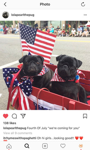 Third place - Yankee Doodle Dandies Dog Contest