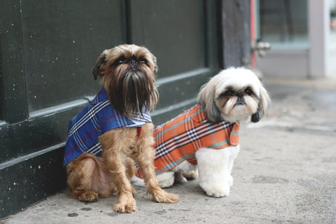 Canine Styles Dog Plaid Rain coats