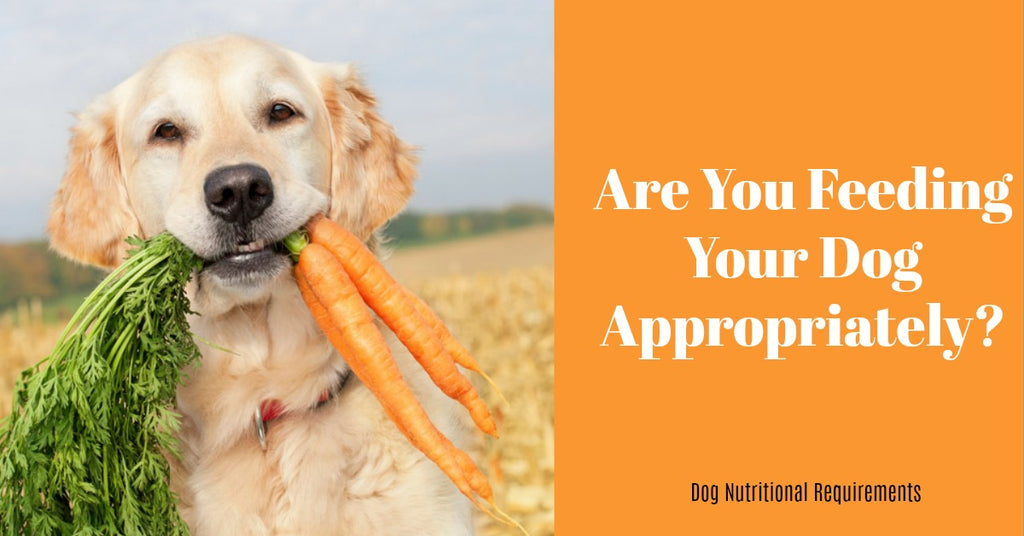 Dog Nutritional Requirements by Canine Styles