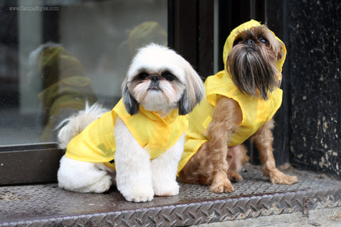 Yellow Dog Rain Slicker