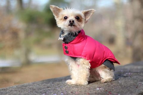Canine Styles Dog Cashmere sweater and Puffer coat