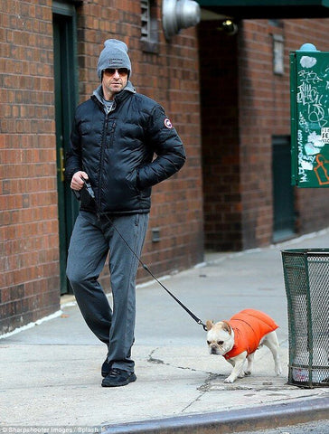 Canine Styles and Hugh Jackman