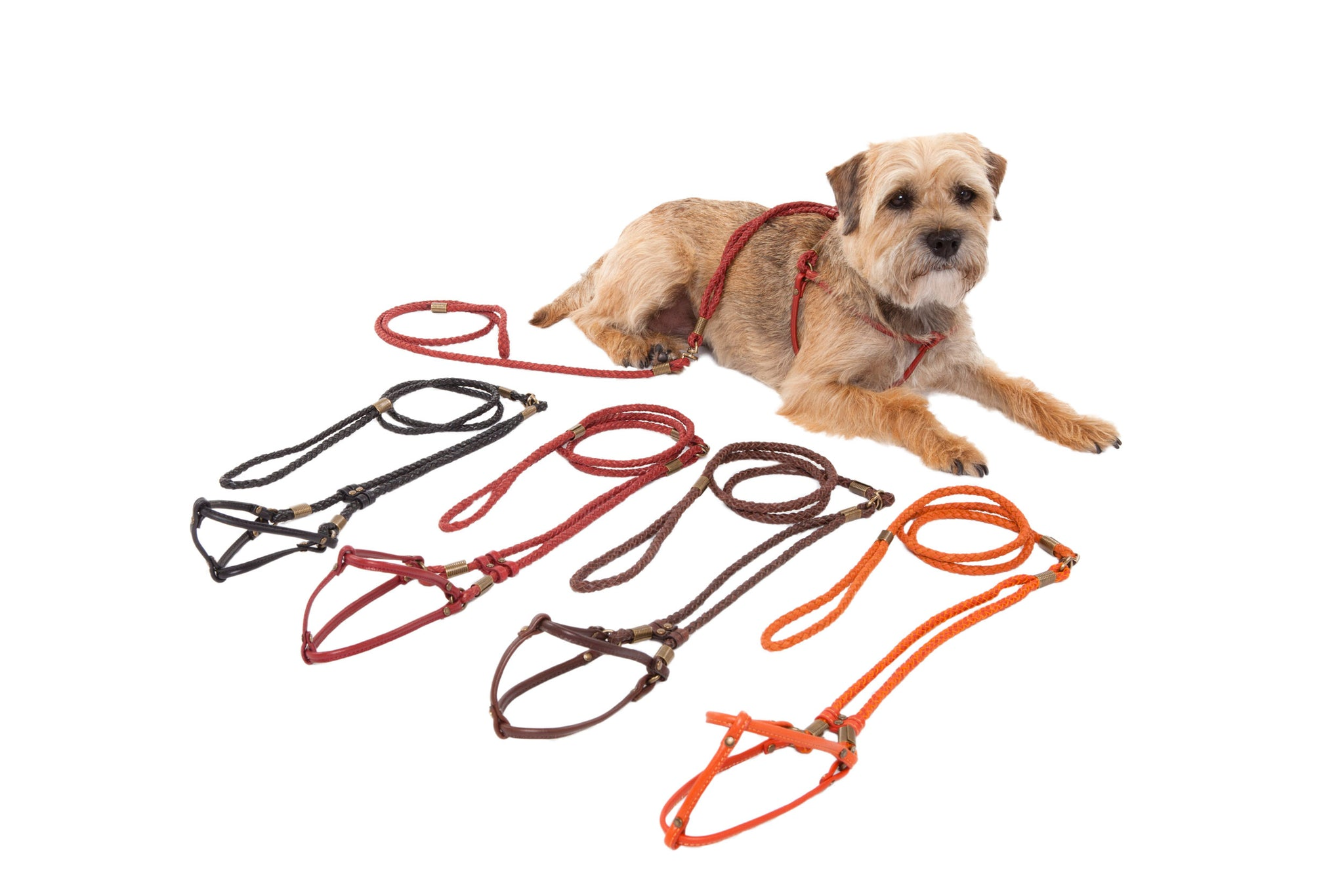 Braided & Flat Leather Step-In Harness - All-in-One Lead & Harness - 4 Color Options