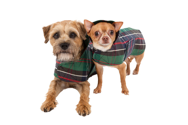 Dog Coat - Raincoat, Waxed, Green Tartan