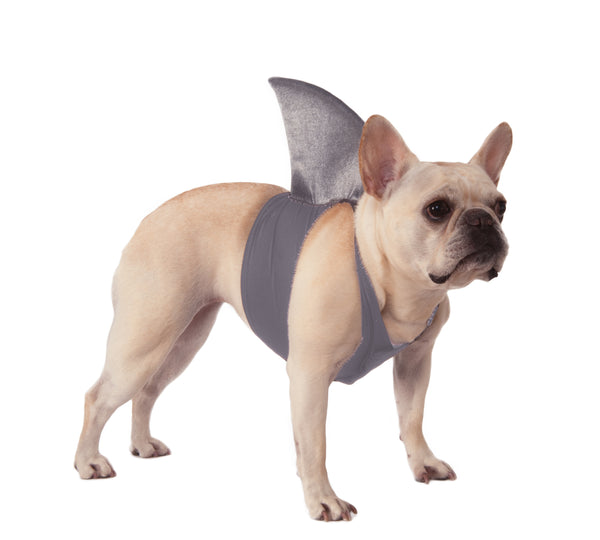 Dog Halloween Costumes | Shark Fin