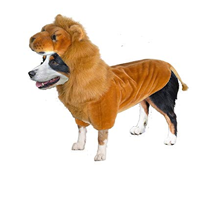 Dog Halloween Costumes | Lion