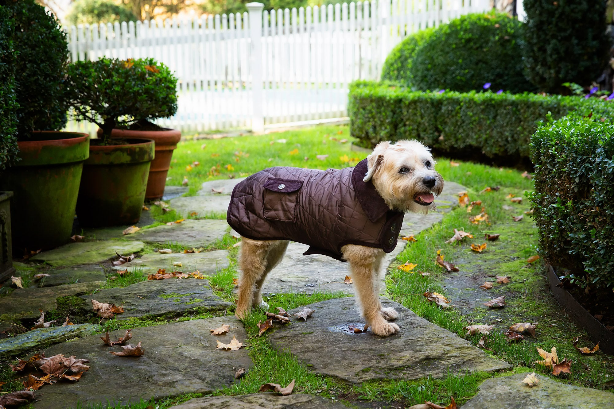 Barn Coat w/Brown Corduroy Collar - 6 Color Options