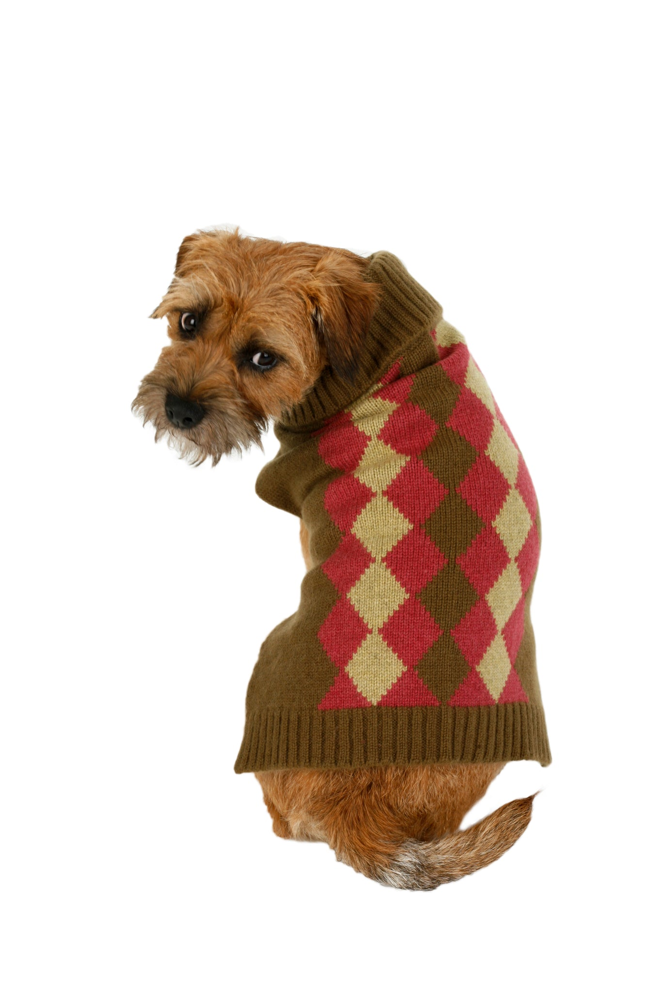 Cashmere Dog Sweater - SALE - Burgundy & Gray Argyle