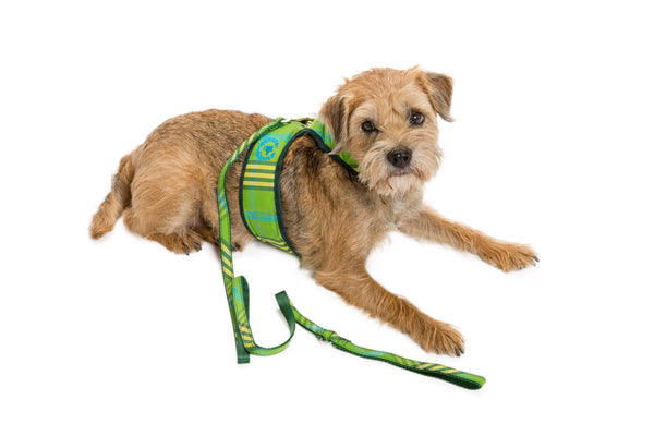 Signature Collection - Dog Body Harness Vest - UNLINED - 5 Color Options