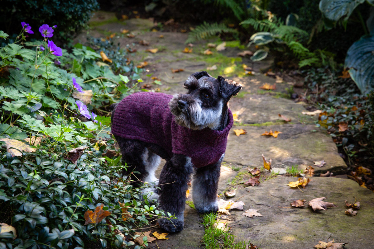 Cashmere Dog Sweater - Navy, Winter White & Heather Burgundy