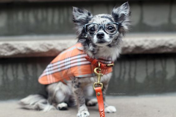 Dog Coat - Raincoat Waxed, Orange Plaid