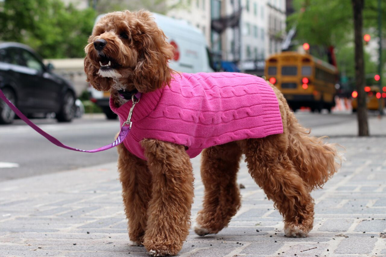 Cashmere Dog Solid Sweater - Hot Pink & Purple