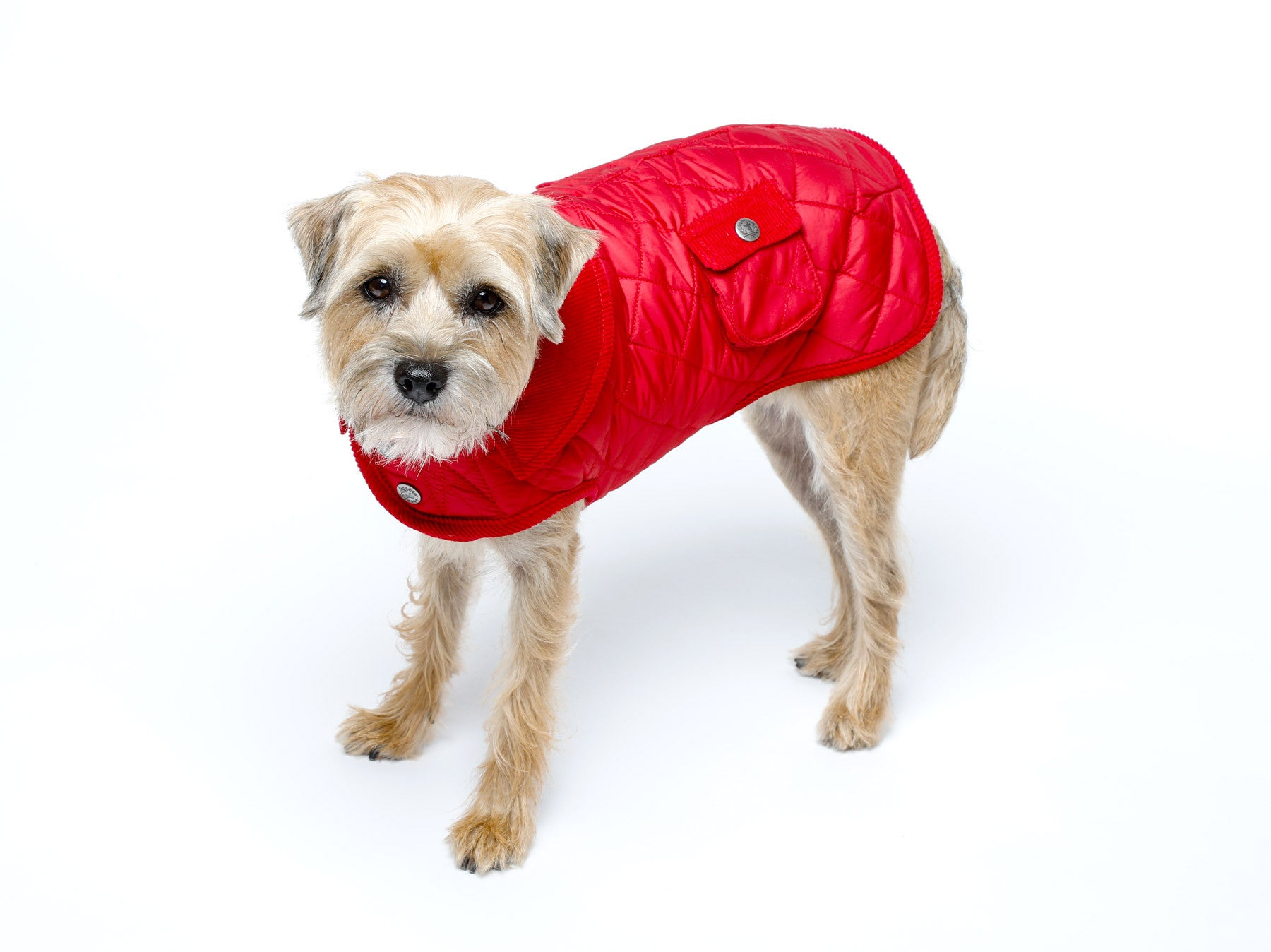 Dog Coat - Barn Coat, Dog Coats, 4 Colors