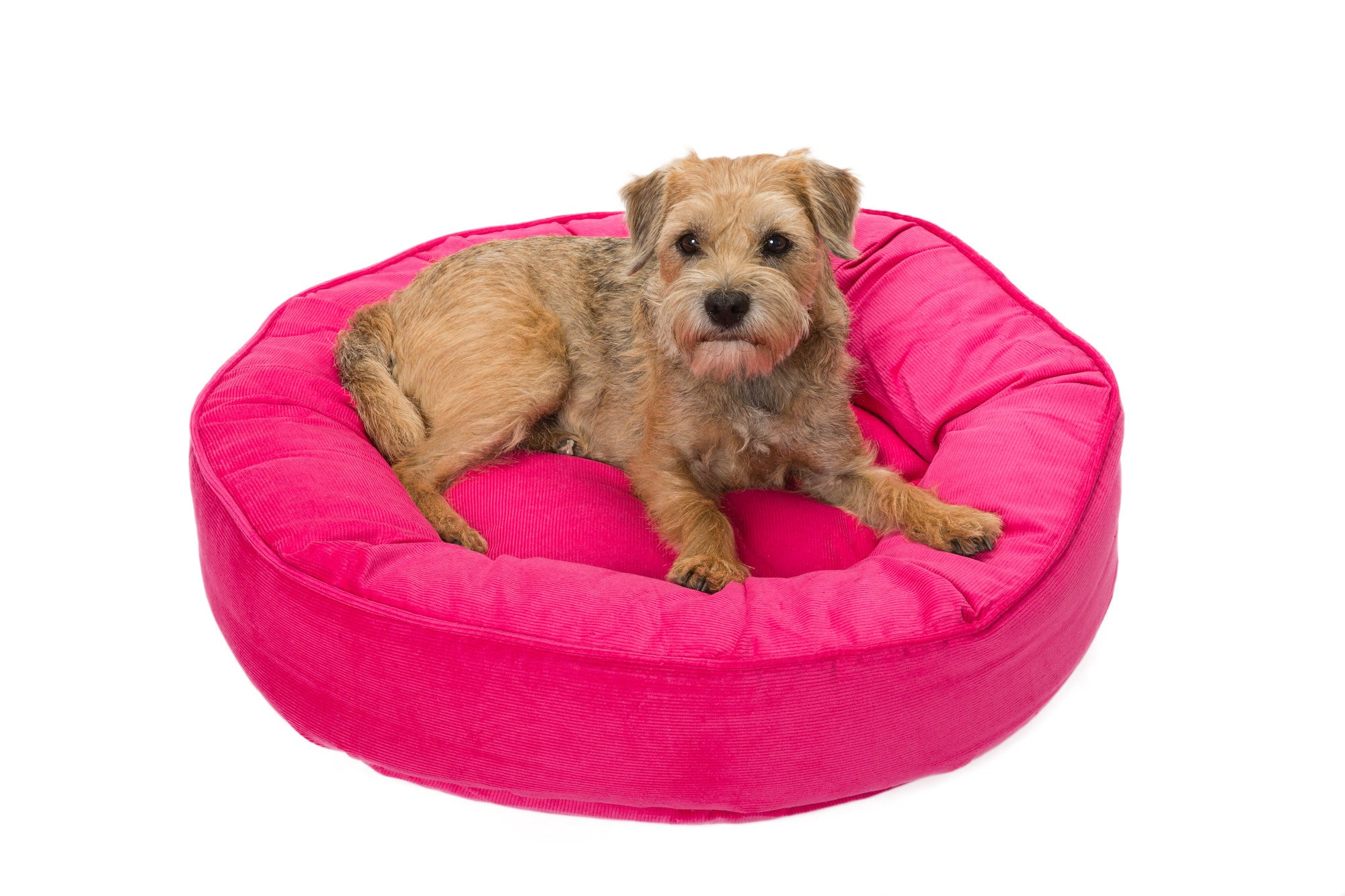 Canine Styles - Corduroy Hot Pink - Corduroy Purple - Dog Bed
