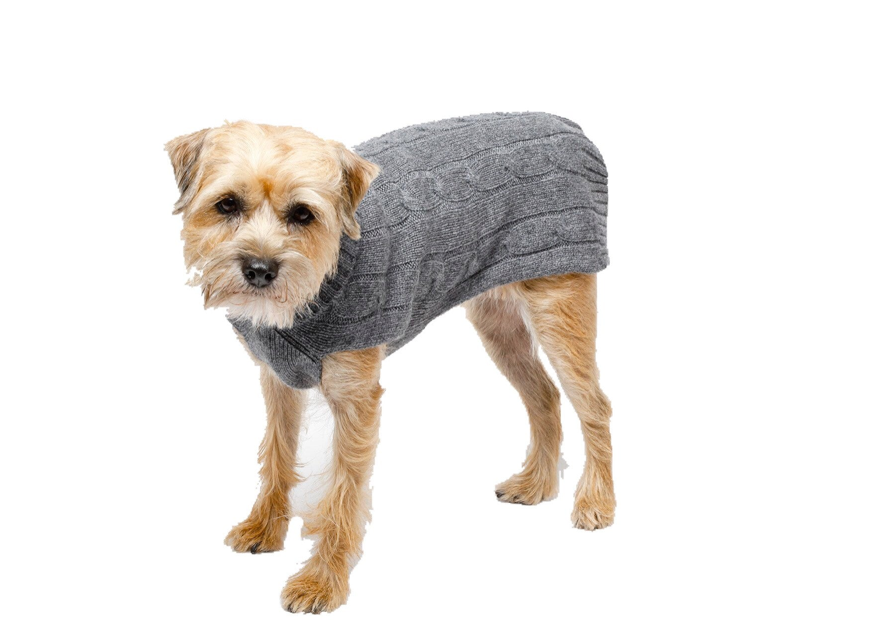 Cashmere Dog Solid Sweater - Gray & Light Pink